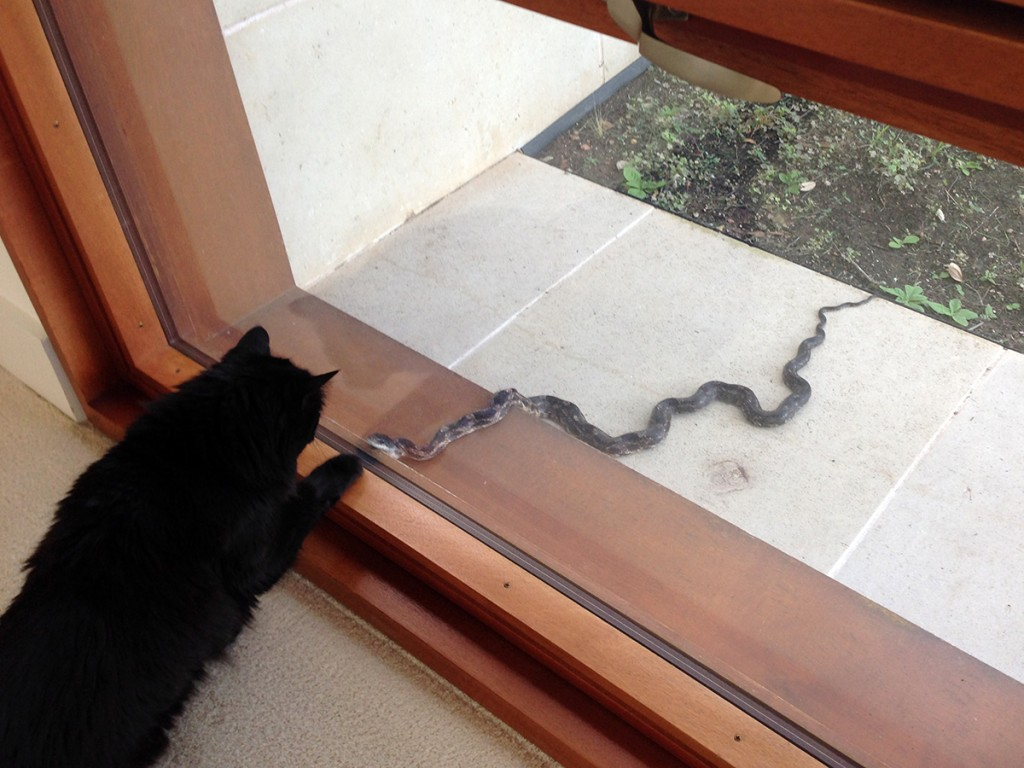 crazy-cat-and-snake